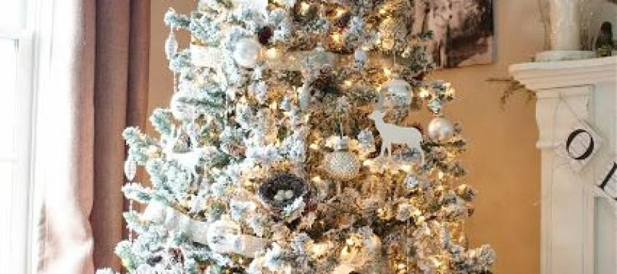 Pinos de navidad nevados