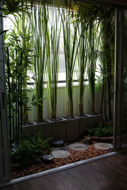 Tropical Balcony Garden Design~ Plantas Jardins Contemporaneos