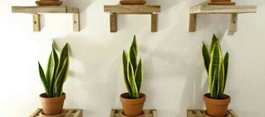 Decoracion de repisas con plantas curso de organizacion for Adornos para plantas con llantas