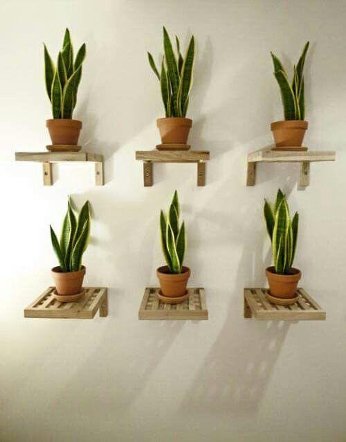 Decoracion de repisas con plantas curso de organizacion for Casas decoradas con plantas naturales