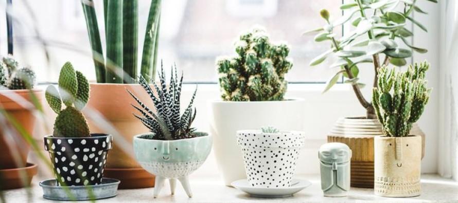 40 ideas para jardines de cocina con plantas suculentas - Curso de ...