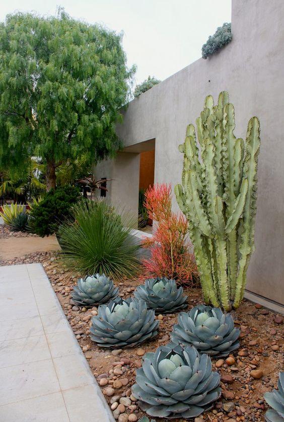 Ideas para dise ar jardines deserticos 23 curso de for Disenar jardines