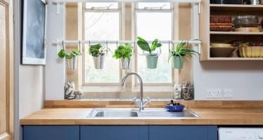DIY Decoraciones con plantas para tu hogar
