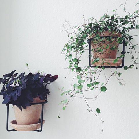 Diy decoraciones con plantas para tu hogar 33 curso de for Decoraciones para tu hogar