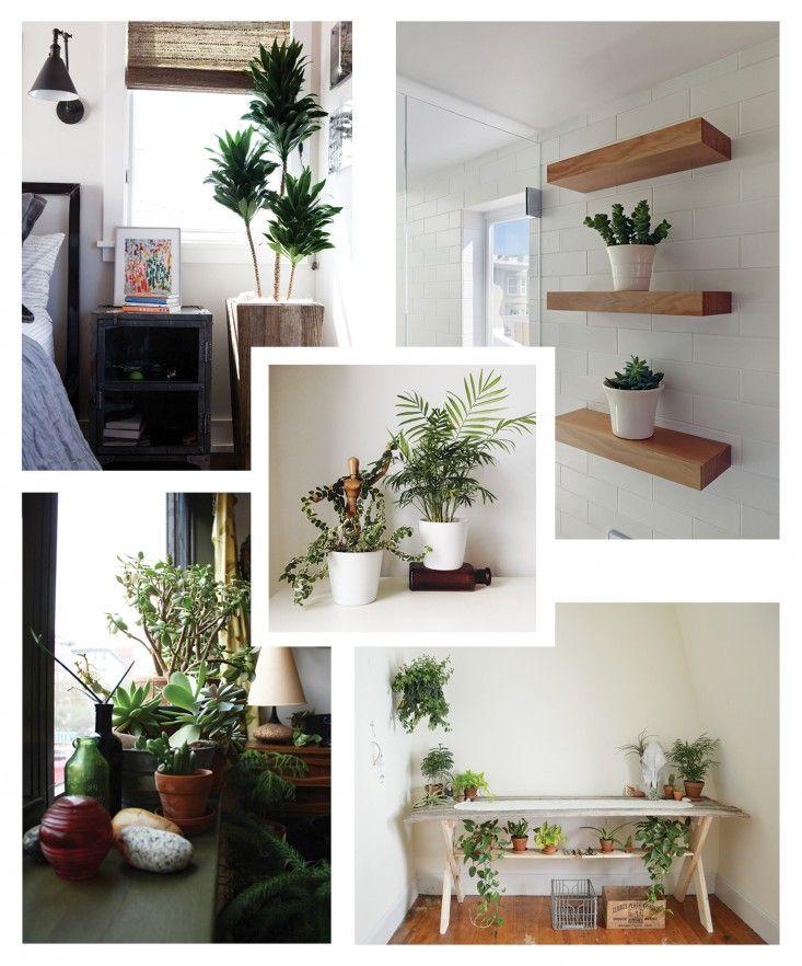 Diy decoraciones con plantas para tu hogar 34 curso de for Decoraciones para tu hogar