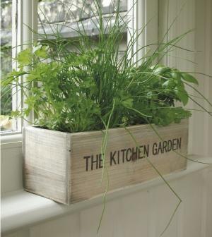 Diy decoraciones con plantas para tu hogar 39 curso de for Decoraciones para tu hogar