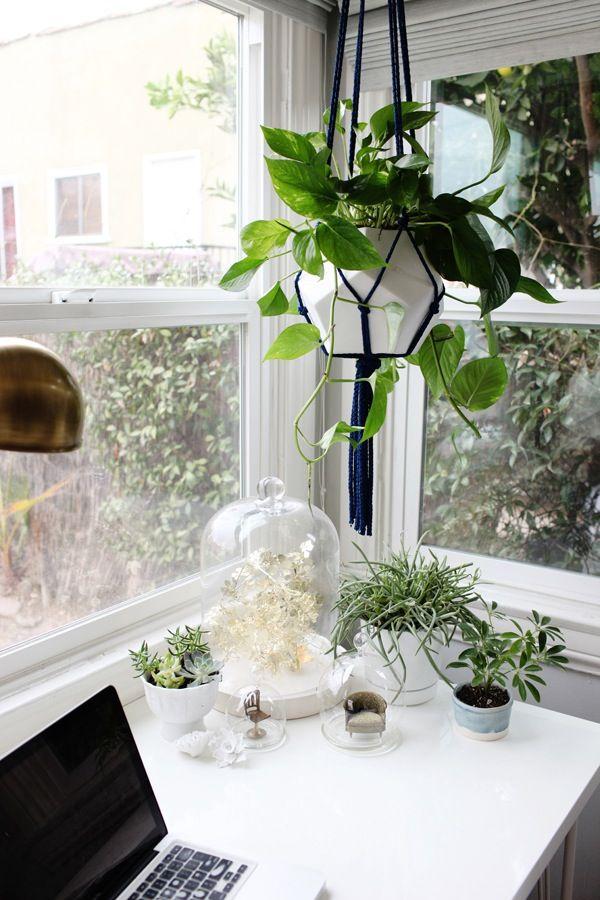 Diy decoraciones con plantas para tu hogar 5 curso de for Decoraciones para tu hogar
