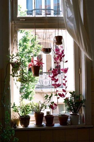 Diy decoraciones con plantas para tu hogar 6 curso de - Decoraciones de hogar ...