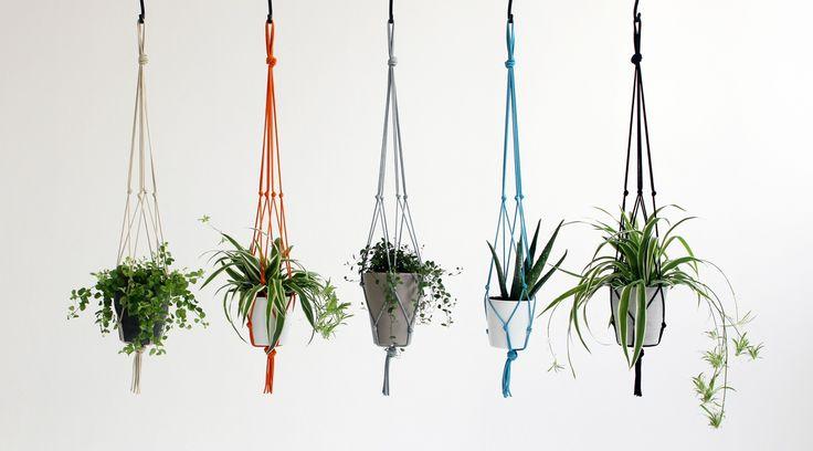 Diy decoraciones con plantas para tu hogar 9 curso de for Decoraciones para tu hogar