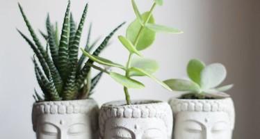 Elementos decorativos que dan vida a tu hogar