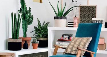 Ideas para decorar tu hogar con macetas