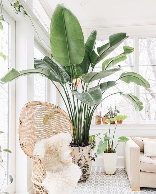 Ideas para decorar tu hogar con macetas 6 curso de for Macetas para interiores hogar