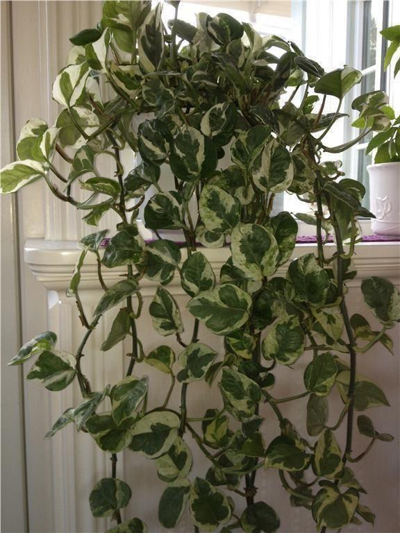 Plantas para decoracion de interiores 19 curso de for Plantas para decoracion de interiores