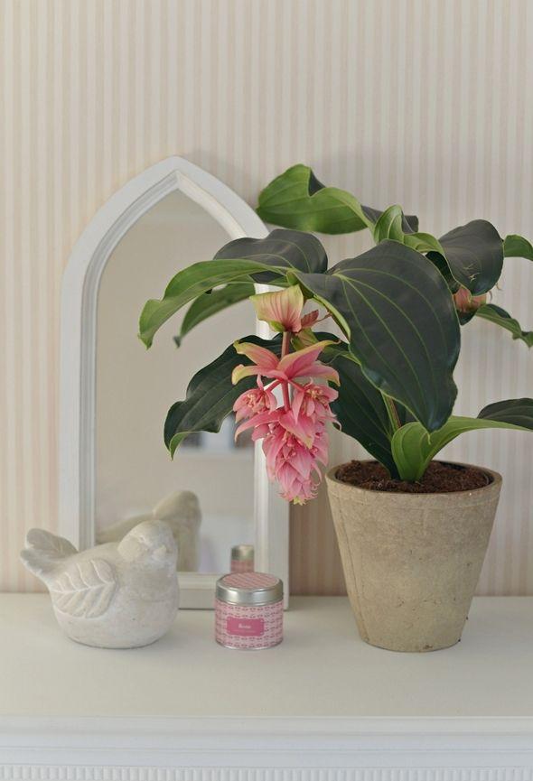 Plantas para decoracion de interiores 21 curso de - Plantas para decoracion de interiores ...