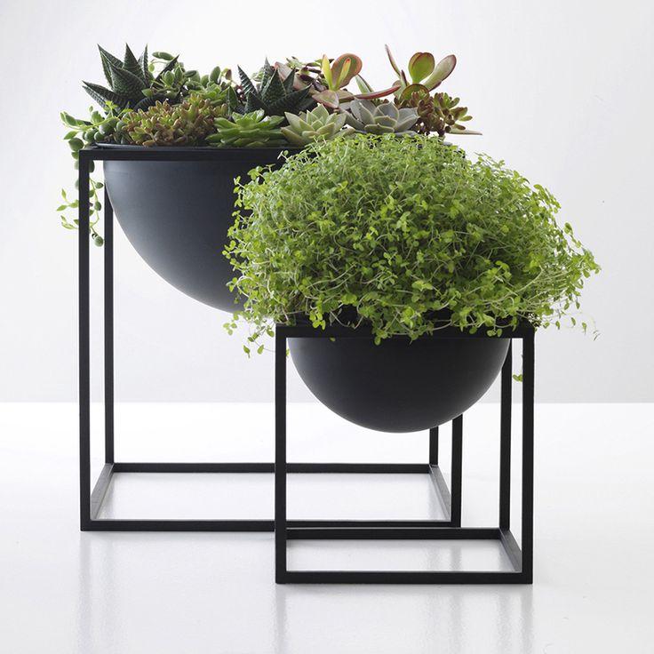 Plantas para decoracion de interiores 22 curso de for Plantas para decoracion de interiores