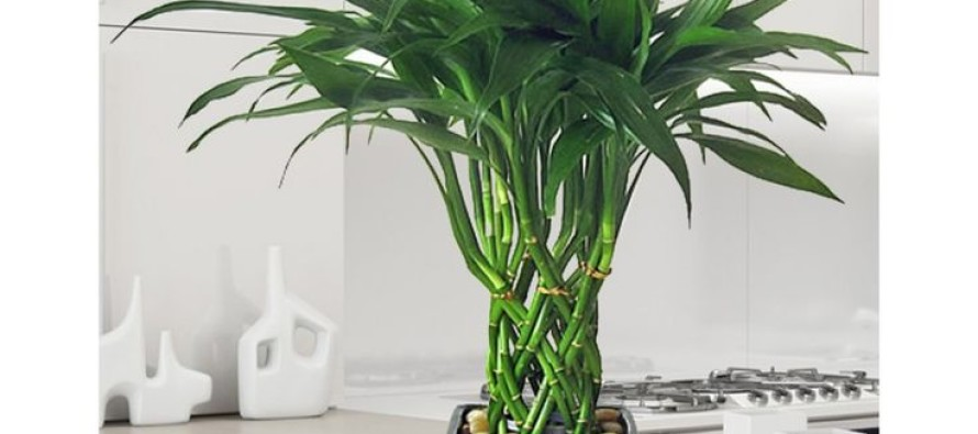 Plantas para decoracion de interiores curso de - Decoracion plantas interior ...