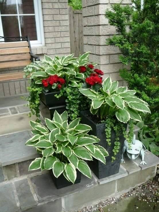 Ideas para jardineria a intentar 15 curso de - Ideas para jardineria ...
