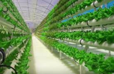 Dise a tu propio jardin de hortalizas 21 curso de - Disena tu jardin ...
