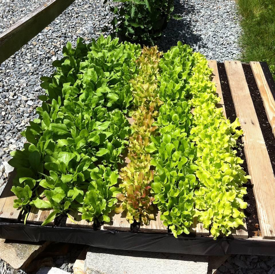 Dise a tu propio jardin de hortalizas 24 curso de - Disena tu jardin ...