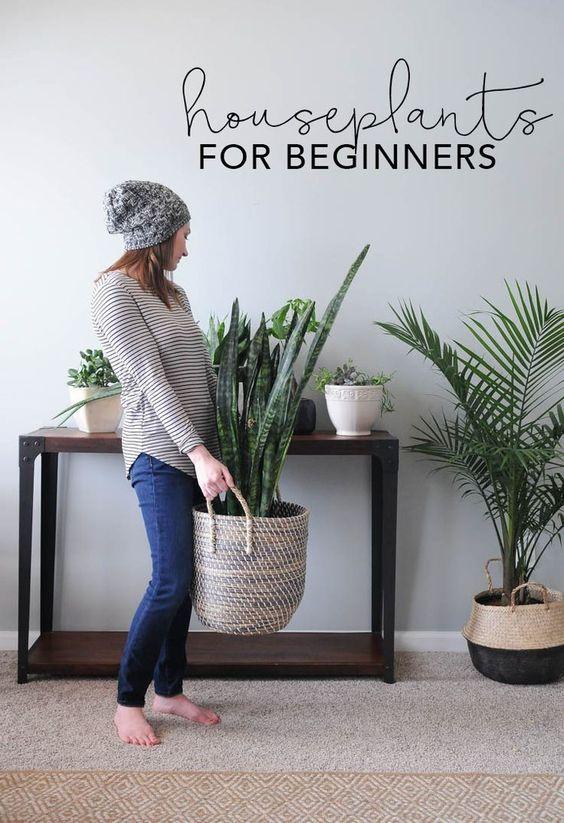 Decoraciones con plantas que debes intentar ya en tu hogar
