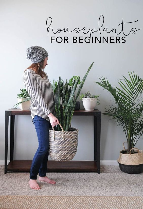 30 ideas para decorar tu hogar con plantas - Ideas para decorar vestibulos ...