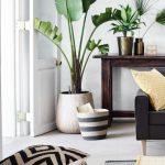 30 ideas para decorar tu hogar con plantas