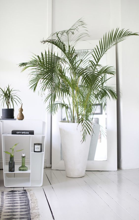 30 ideas para decorar tu hogar con plantas for Planta tropical interior