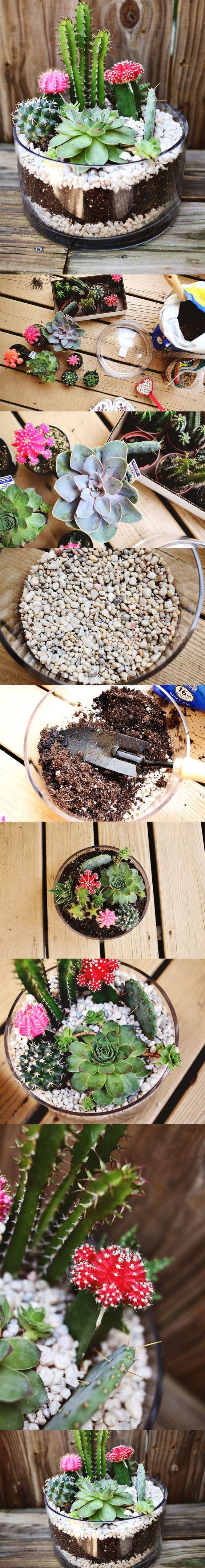 DIY terrarimum