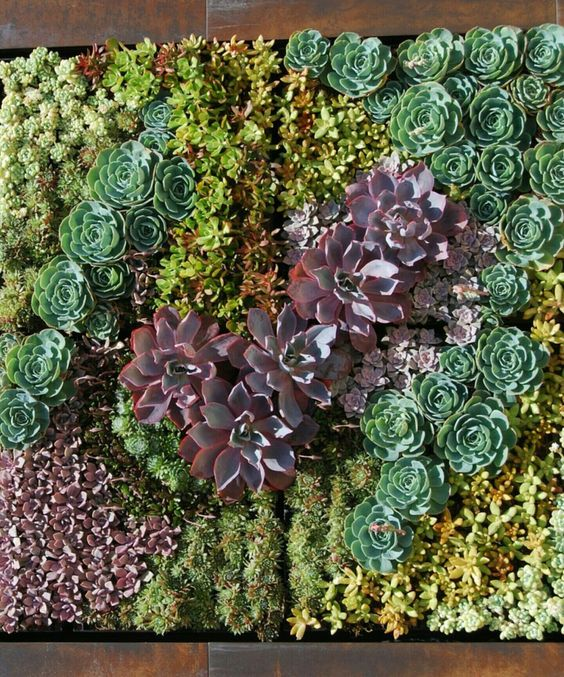 Añade un Jardín Vertical a tus Paredes con Mucho color y Estilo