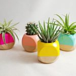 Ideas para decorar tu hogar con cactus miniatura (1)