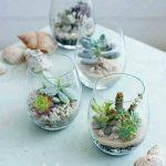 Ideas para decorar tu hogar con cactus miniatura (10)