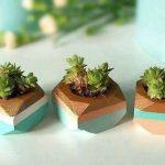 Ideas para decorar tu hogar con cactus miniatura (11)