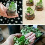 Ideas para decorar tu hogar con cactus miniatura (15)