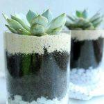 Ideas para decorar tu hogar con cactus miniatura (16)