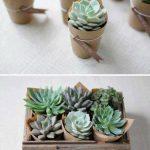 Ideas para decorar tu hogar con cactus miniatura (17)