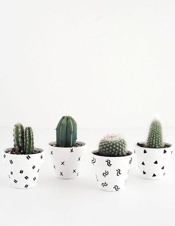Ideas para decorar tu hogar con cactus miniatura (2)