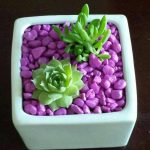 Ideas para decorar tu hogar con cactus miniatura (20)