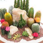 Ideas para decorar tu hogar con cactus miniatura (21)