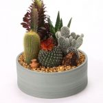 Ideas para decorar tu hogar con cactus miniatura (22)