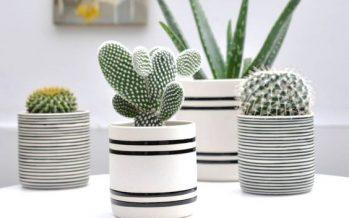 Ideas para decorar tu hogar con cactus miniatura