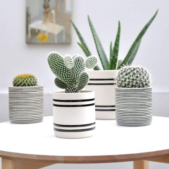 Ideas para decorar tu hogar con cactus miniatura (3)