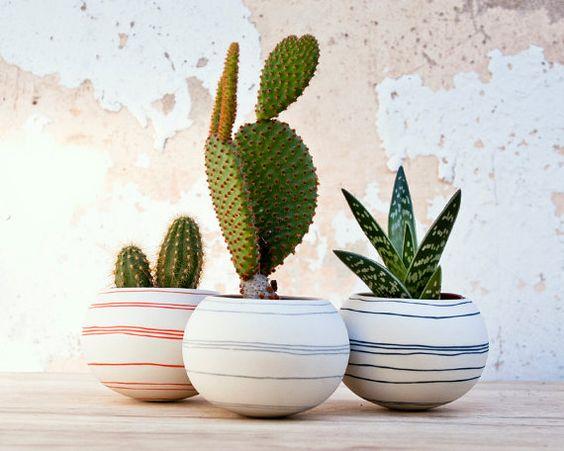 Ideas para decorar tu hogar con cactus miniatura (4)