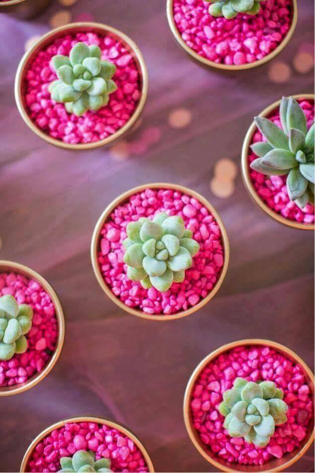Ideas para decorar tu hogar con cactus miniatura (6)