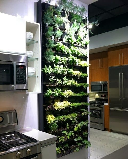 como renovar la cocina agregando plantas (4)