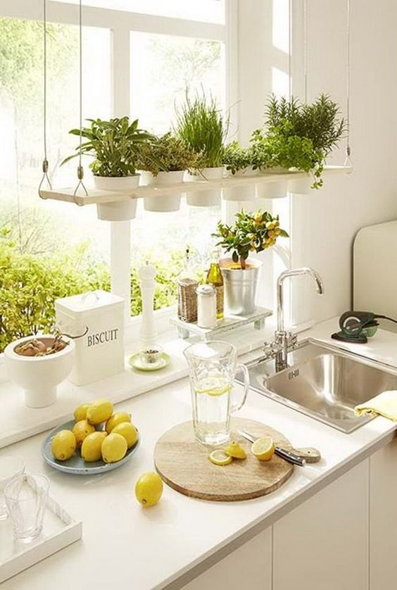 como renovar la cocina agregando plantas
