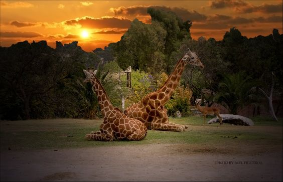 lugares para visitar en mexico | African Safari en Puebla (6)