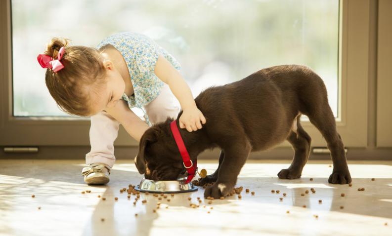 Cuidado de las mascotas para niños