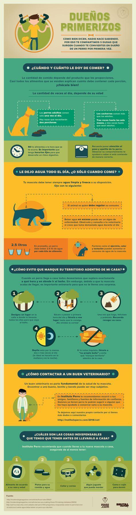 Cuidados de las mascotas domesticas