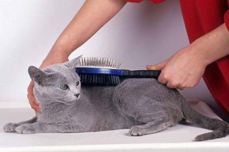 Cuidados de un gato domestico