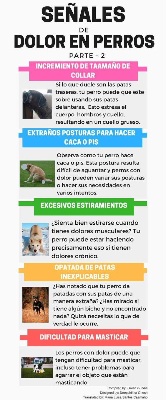 Cuidados de una mascota perro
